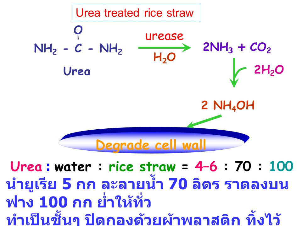 Urea : water : rice straw = 4–6 : 70 : 100