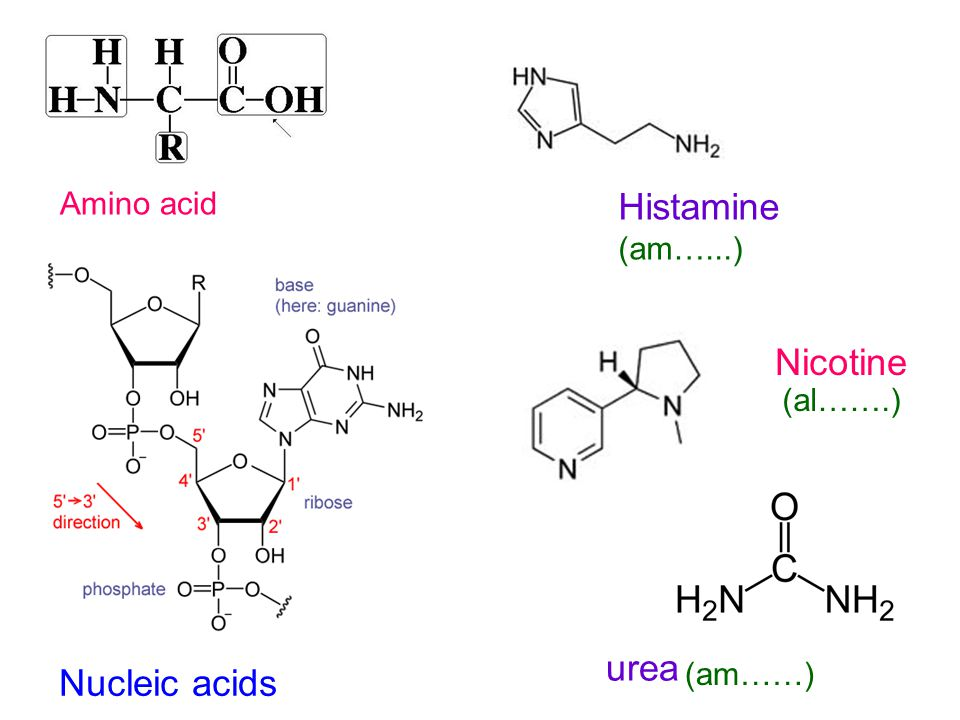Histamine (am…...) Nicotine urea Nucleic acids Amino acid (al…….)