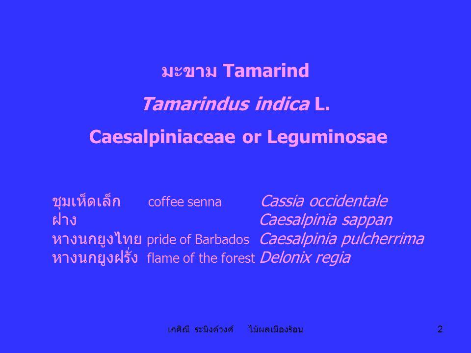 Caesalpiniaceae or Leguminosae