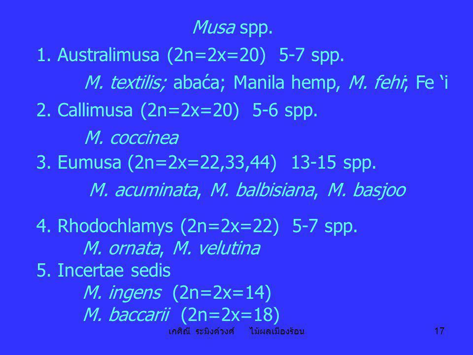 1. Australimusa (2n=2x=20) 5-7 spp.