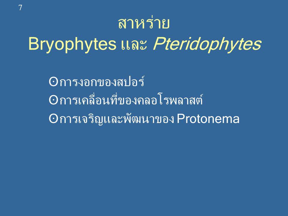 สาหร่าย Bryophytes และ Pteridophytes