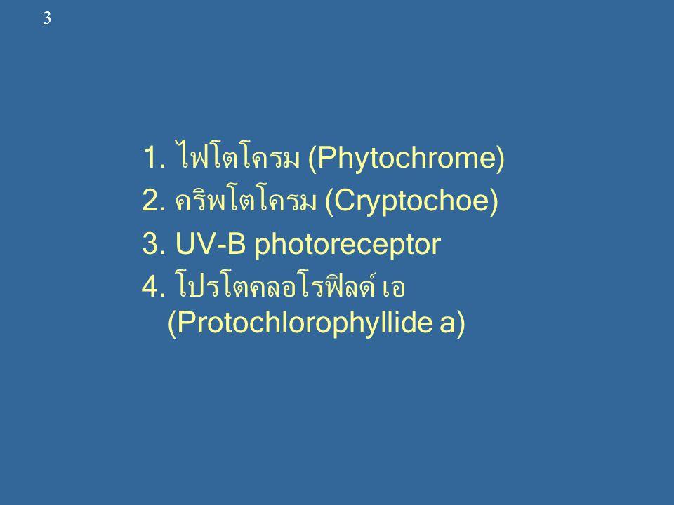 1. ไฟโตโครม (Phytochrome) 2. คริพโตโครม (Cryptochoe)