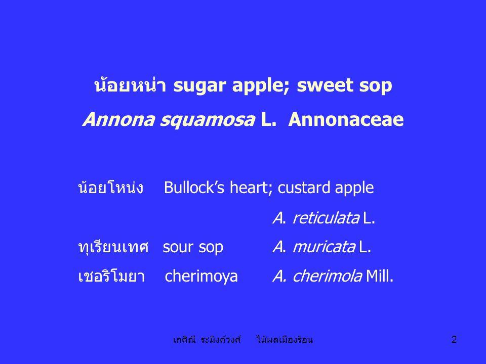 น้อยหน่า sugar apple; sweet sop Annona squamosa L. Annonaceae