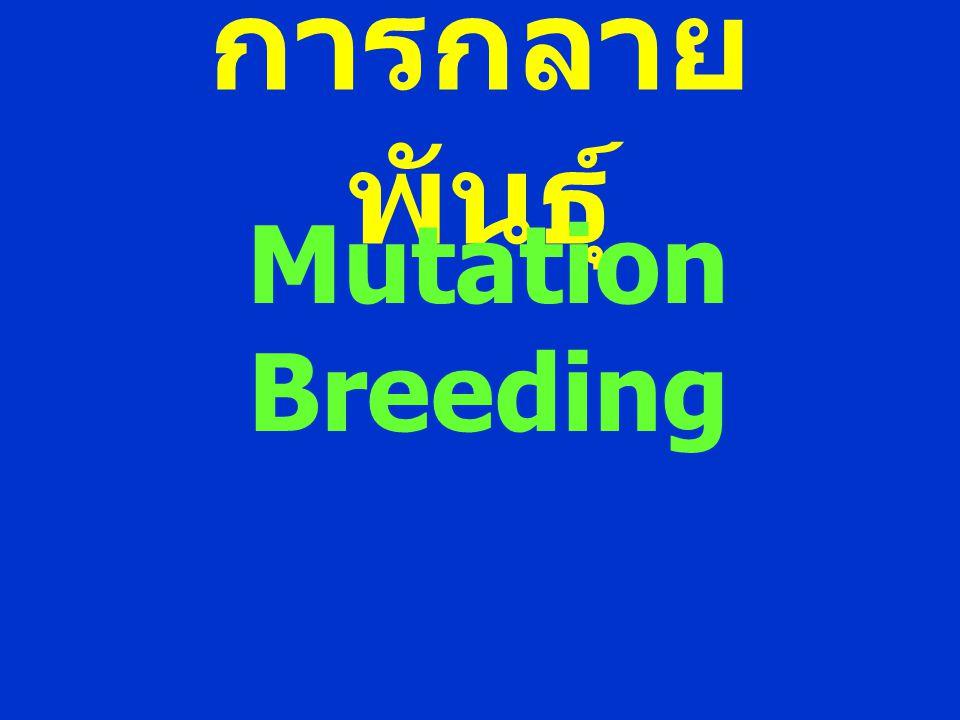 การกลายพันธุ์ Mutation Breeding