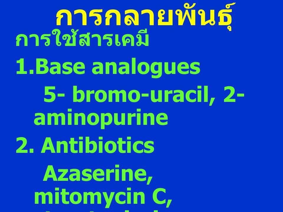 การกลายพันธุ์ การใช้สารเคมี Base analogues