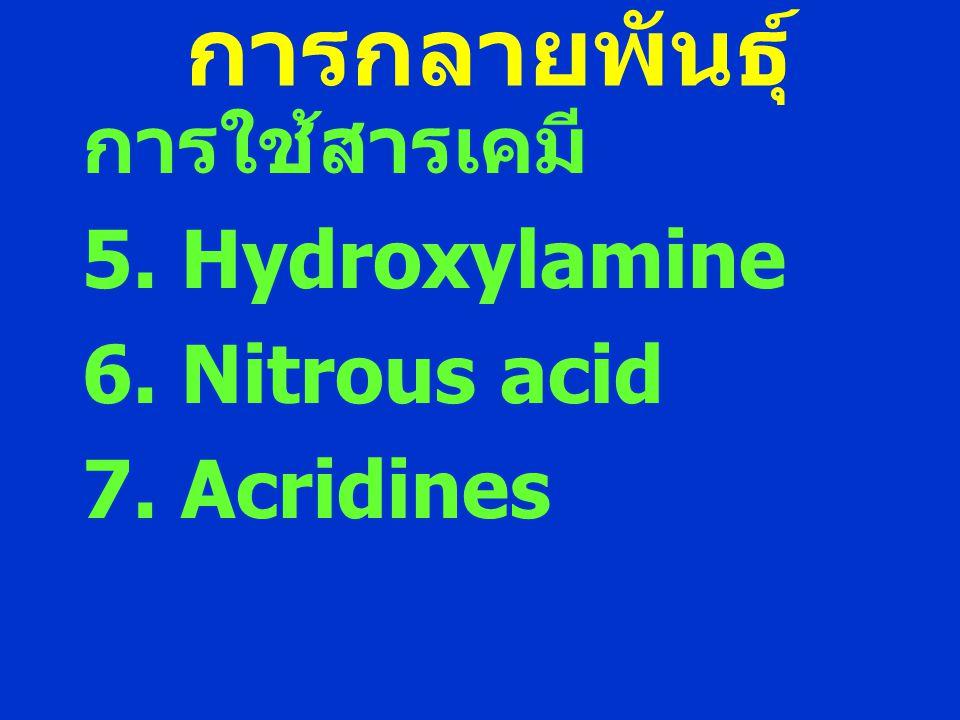 การกลายพันธุ์ การใช้สารเคมี 5. Hydroxylamine 6. Nitrous acid
