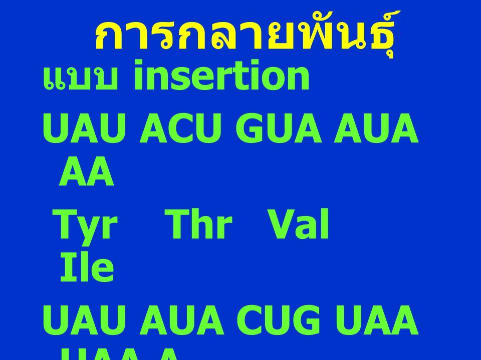 การกลายพันธุ์ แบบ insertion UAU ACU GUA AUA AA Tyr Thr Val Ile