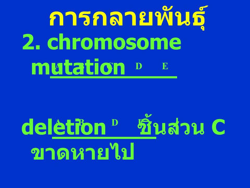 การกลายพันธุ์ 2. chromosome mutation deletion ชิ้นส่วน C ขาดหายไป