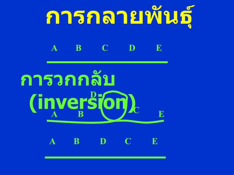 การกลายพันธุ์ การวกกลับ (inversion) A B C D E. D. C. A B.