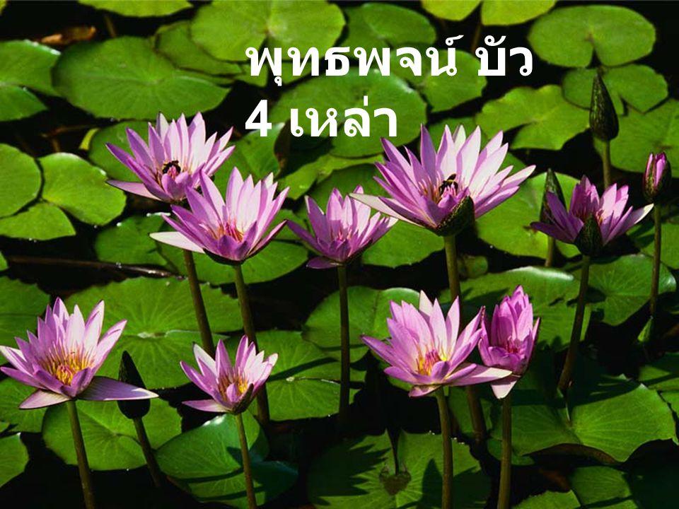 พุทธพจน์ บัว 4 เหล่า