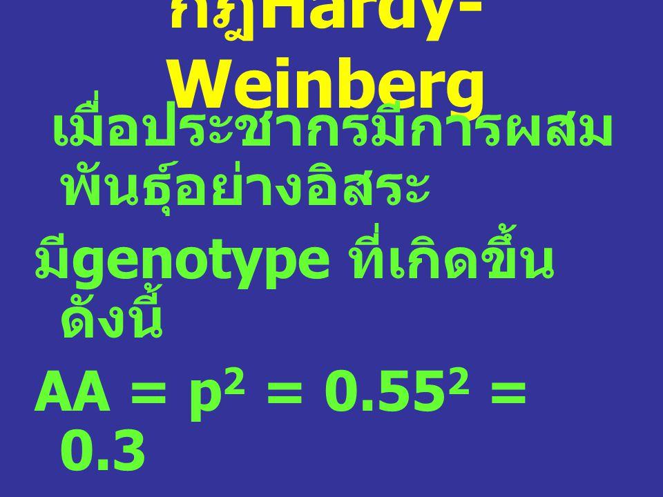 กฎHardy-Weinberg เมื่อประชากรมีการผสมพันธุ์อย่างอิสระ