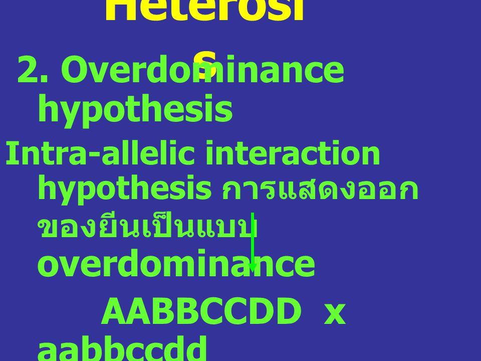 Heterosis 2. Overdominance hypothesis AABBCCDD x aabbccdd AaBbCcDd