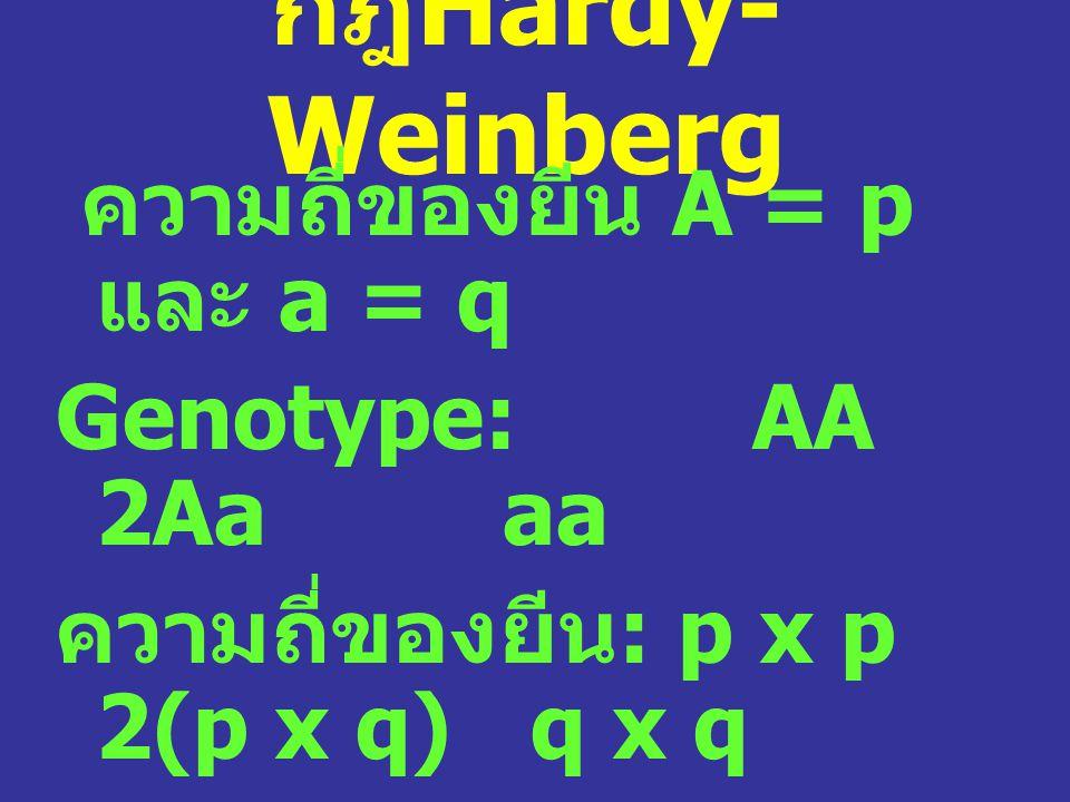 กฎHardy-Weinberg ความถี่ของยีน A = p และ a = q Genotype: AA 2Aa aa