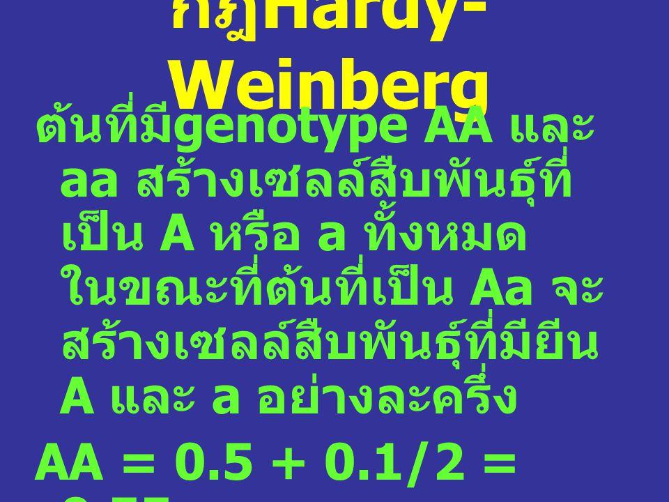 กฎHardy-Weinberg