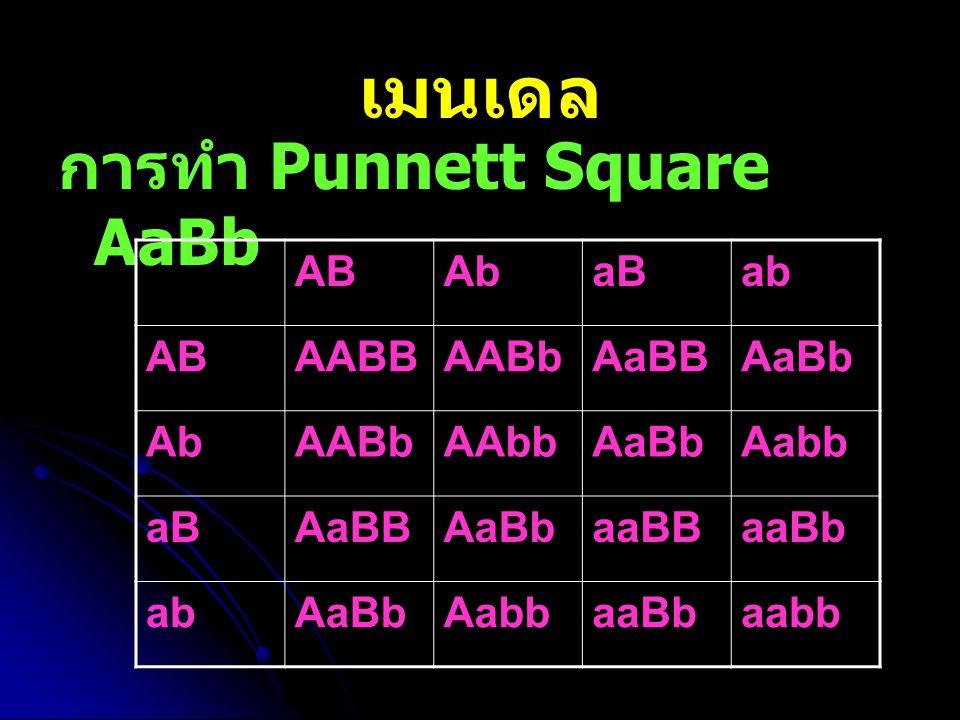 เมนเดล การทำ Punnett Square AaBb AB Ab aB ab AABB AABb AaBB AaBb AAbb