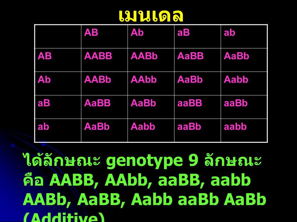 เมนเดล AB. Ab. aB. ab. AABB. AABb. AaBB. AaBb. AAbb. Aabb. aaBB. aaBb. aabb.