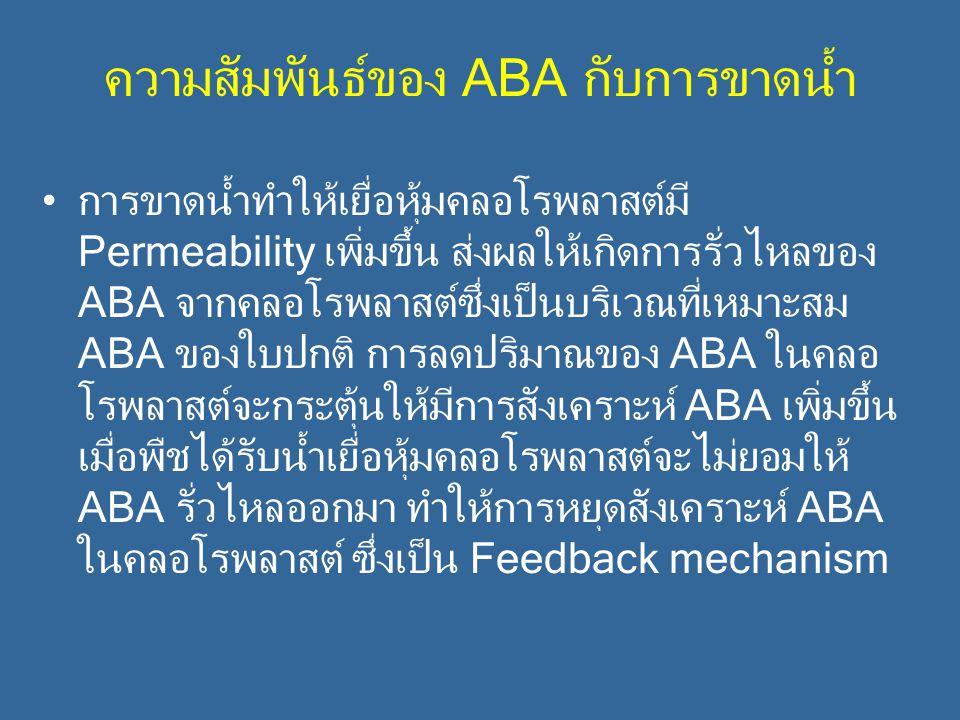 ความสัมพันธ์ของ ABA กับการขาดน้ำ