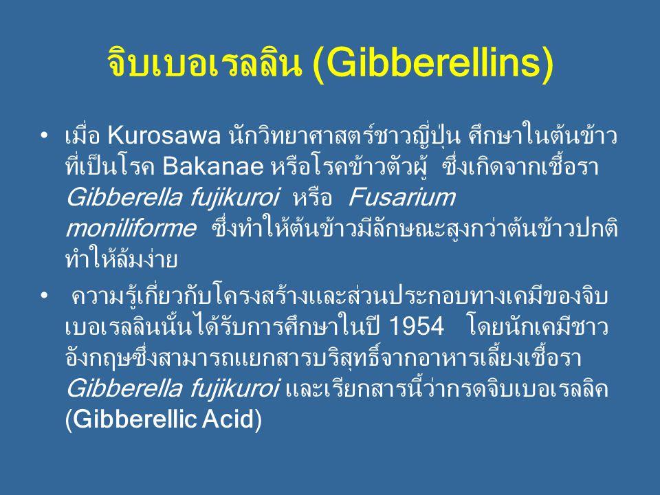 จิบเบอเรลลิน (Gibberellins)