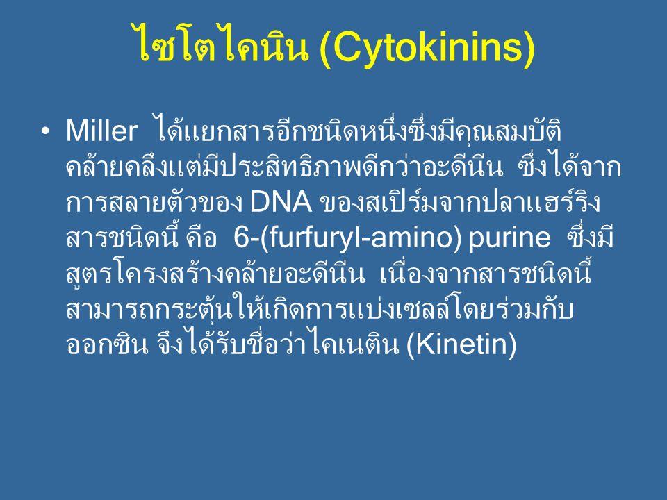 ไซโตไคนิน (Cytokinins)