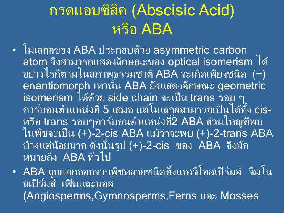 กรดแอบซิสิค (Abscisic Acid) หรือ ABA