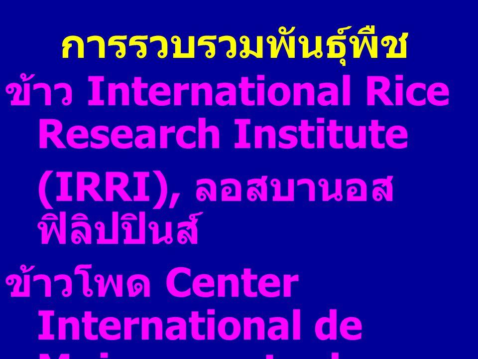 การรวบรวมพันธุ์พืช ข้าว International Rice Research Institute. (IRRI), ลอสบานอส ฟิลิปปินส์
