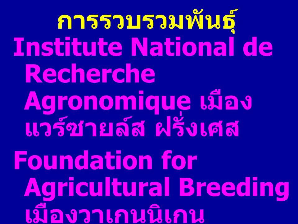 การรวบรวมพันธุ์ Institute National de Recherche Agronomique เมืองแวร์ซายล์ส ฝรั่งเศส.