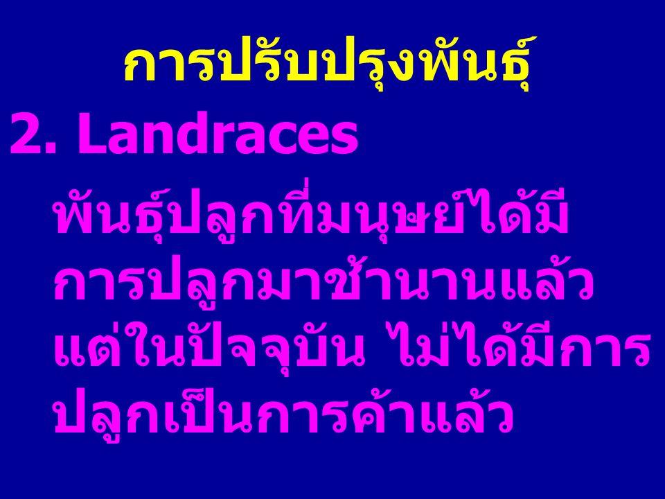 การปรับปรุงพันธุ์ 2. Landraces.