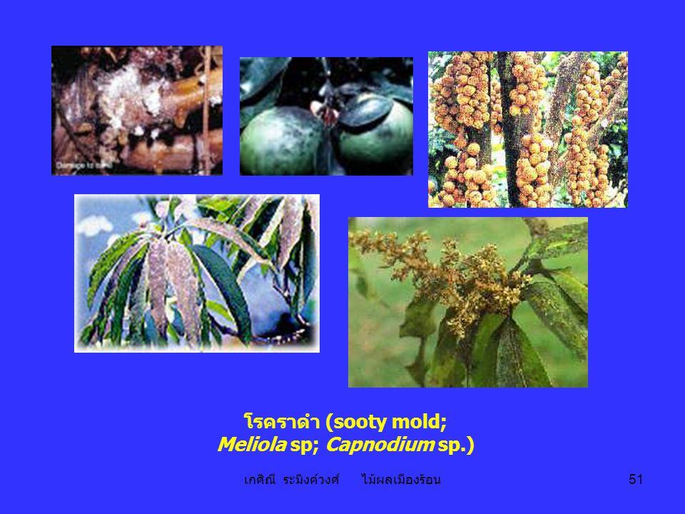 โรคราดำ (sooty mold; Meliola sp; Capnodium sp.)