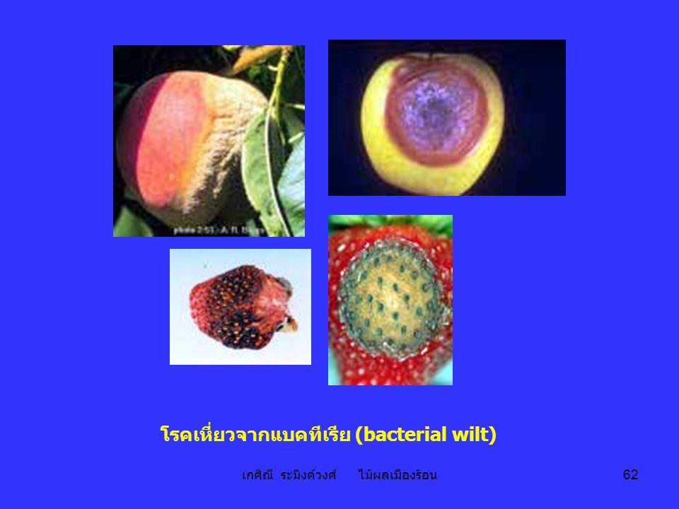 โรคเหี่ยวจากแบคทีเรีย (bacterial wilt)