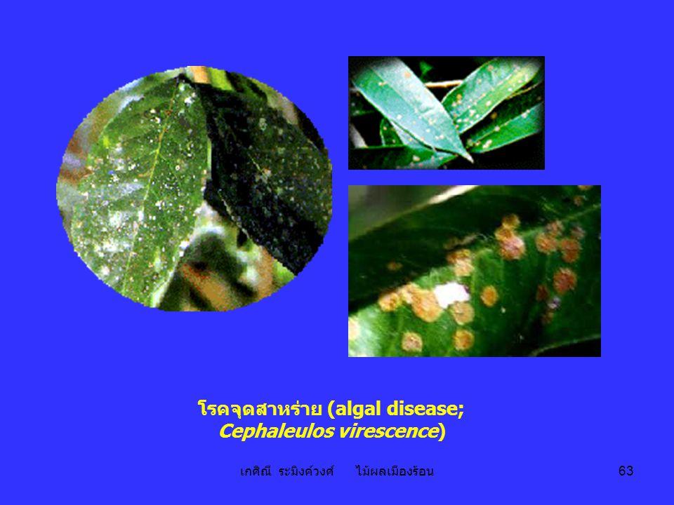 โรคจุดสาหร่าย (algal disease; Cephaleulos virescence)