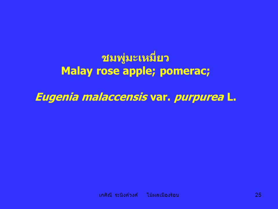 Malay rose apple; pomerac; Eugenia malaccensis var. purpurea L.