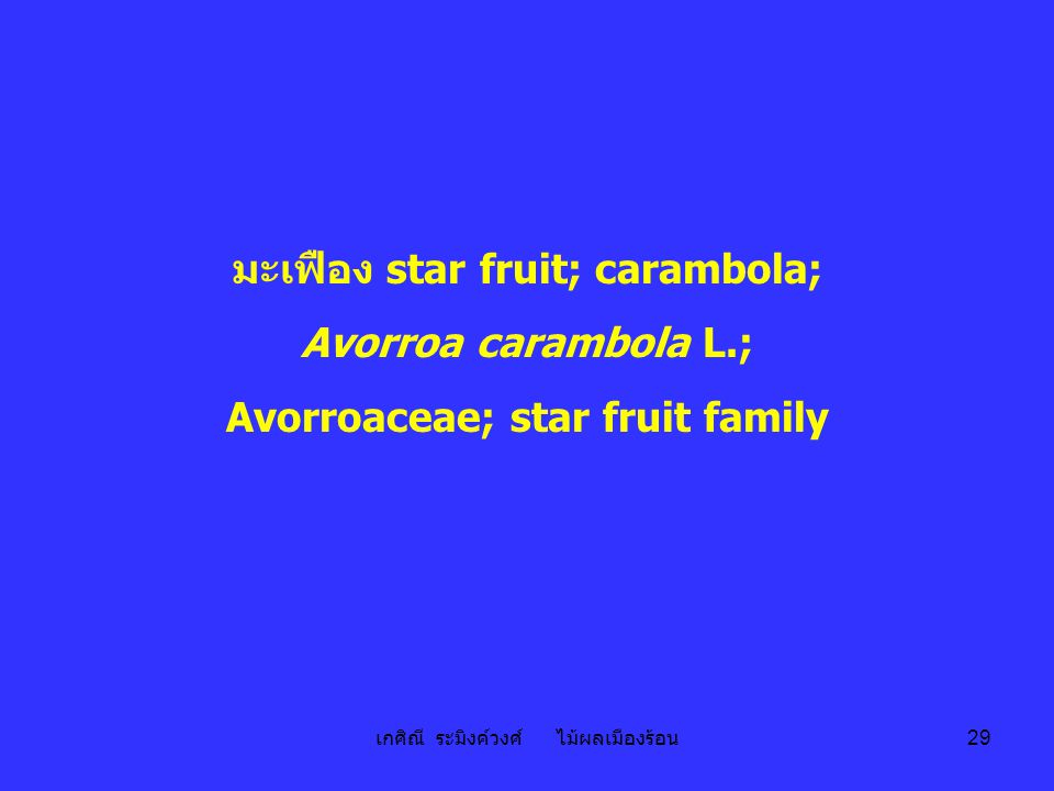 มะเฟือง star fruit; carambola; Avorroaceae; star fruit family