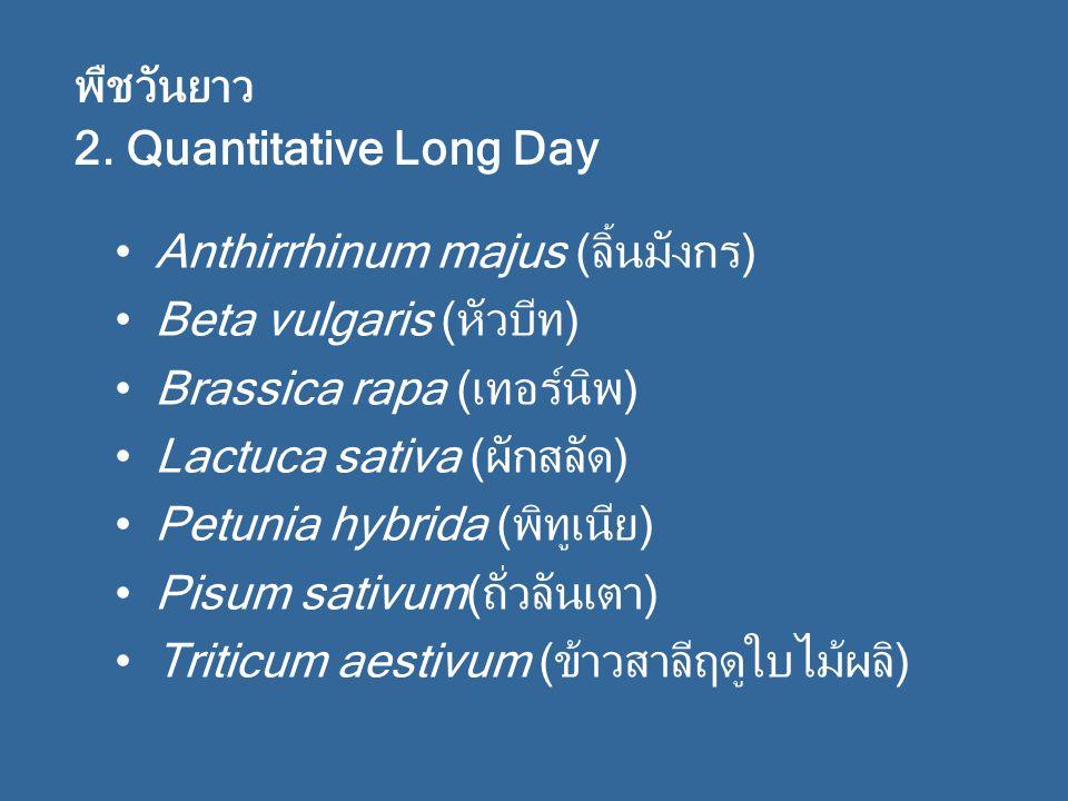 พืชวันยาว 2. Quantitative Long Day. Anthirrhinum majus (ลิ้นมังกร) Beta vulgaris (หัวบีท) Brassica rapa (เทอร์นิพ)