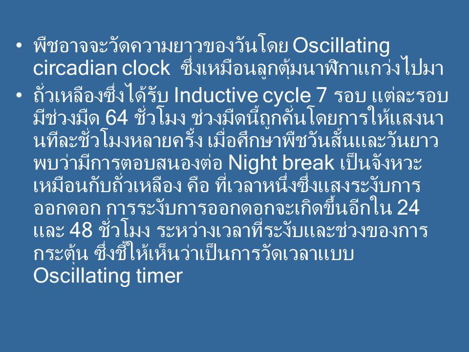พืชอาจจะวัดความยาวของวันโดย Oscillating circadian clock ซึ่งเหมือนลูกตุ้มนาฬิกาแกว่งไปมา