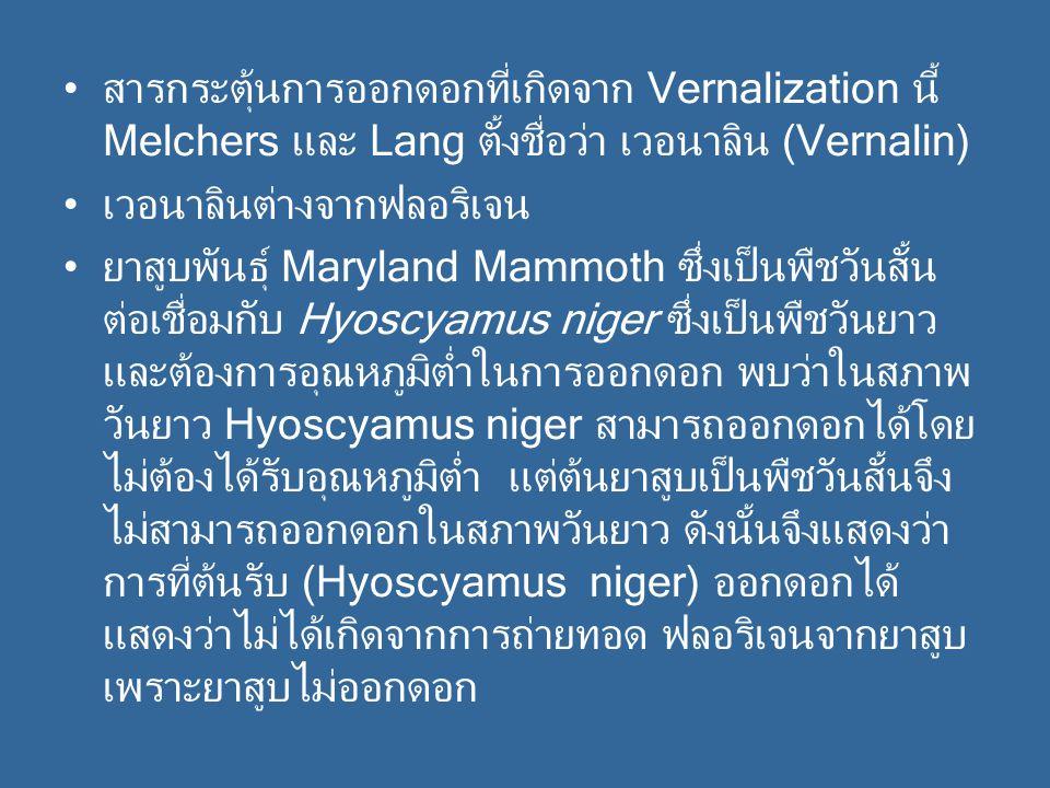 สารกระตุ้นการออกดอกที่เกิดจาก Vernalization นี้ Melchers และ Lang ตั้งชื่อว่า เวอนาลิน (Vernalin)