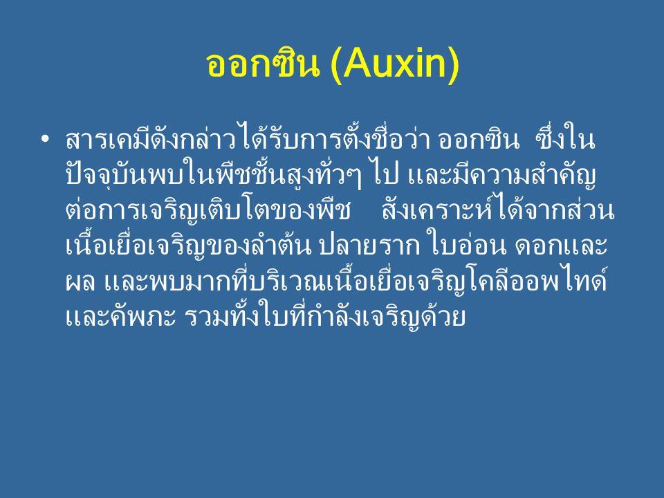 ออกซิน (Auxin)
