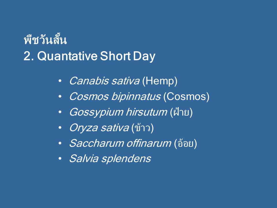พืชวันสั้น 2. Quantative Short Day Canabis sativa (Hemp)