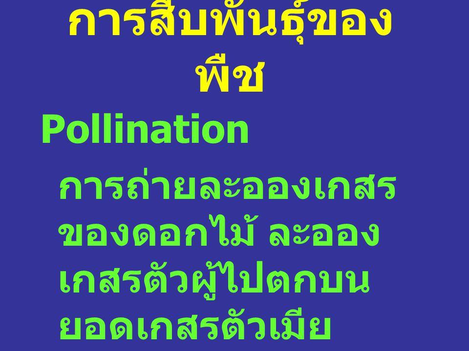 การสืบพันธุ์ของพืช Pollination
