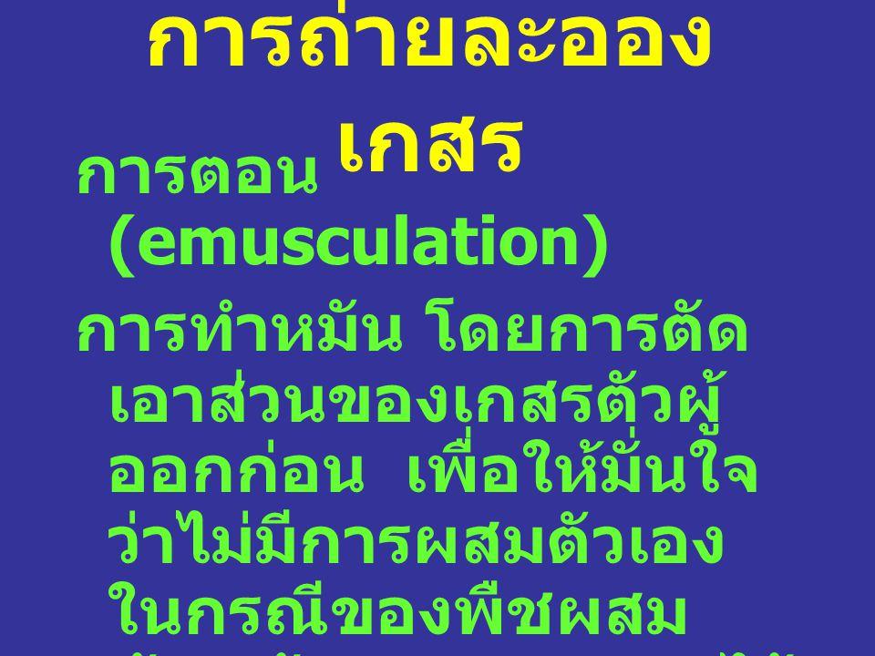 การถ่ายละอองเกสร การตอน (emusculation)
