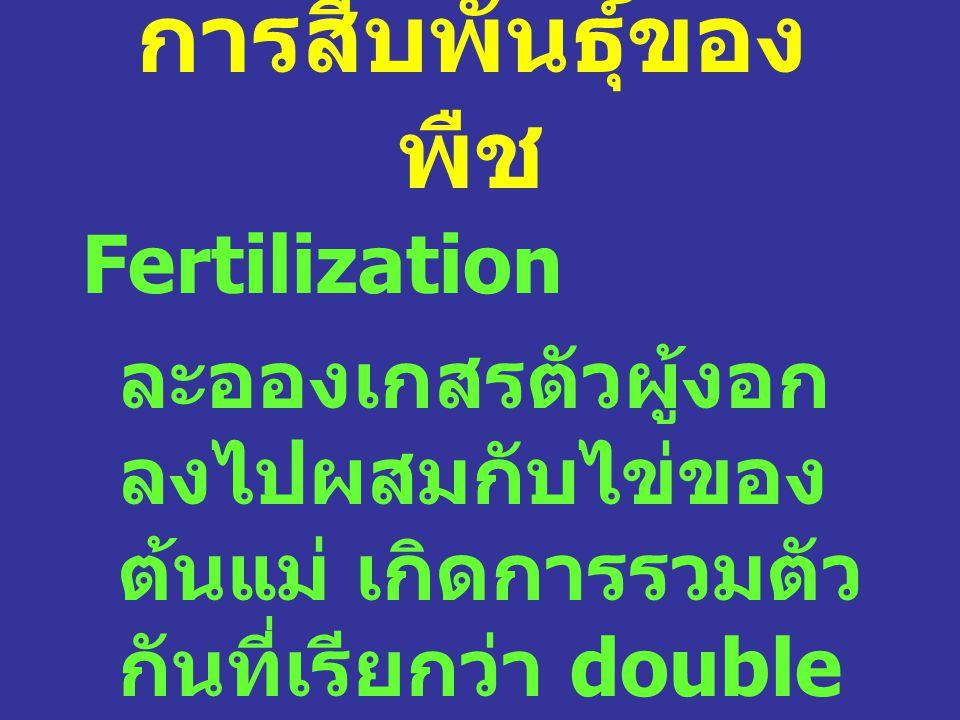 การสืบพันธุ์ของพืช Fertilization