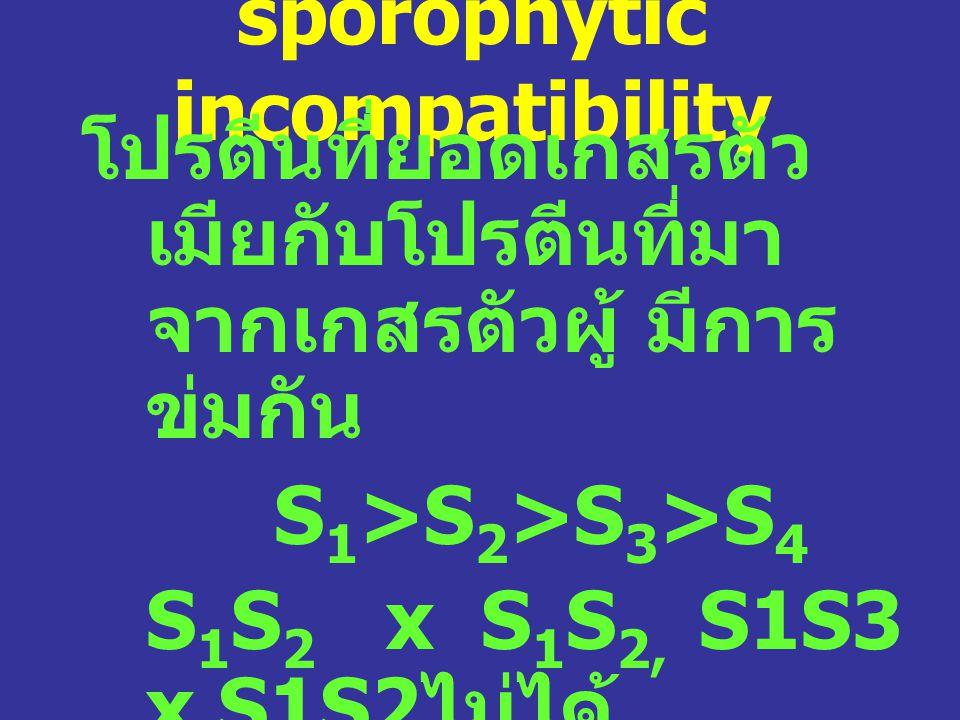 sporophytic incompatibility