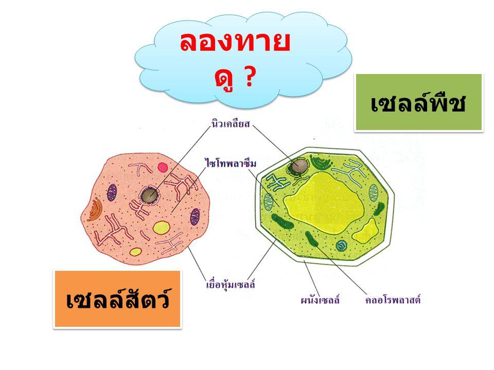 ลองทายดู เซลล์พืช เซลล์สัตว์