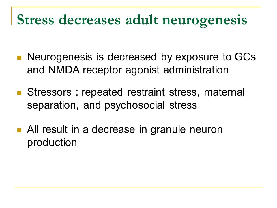 Stress decreases adult neurogenesis