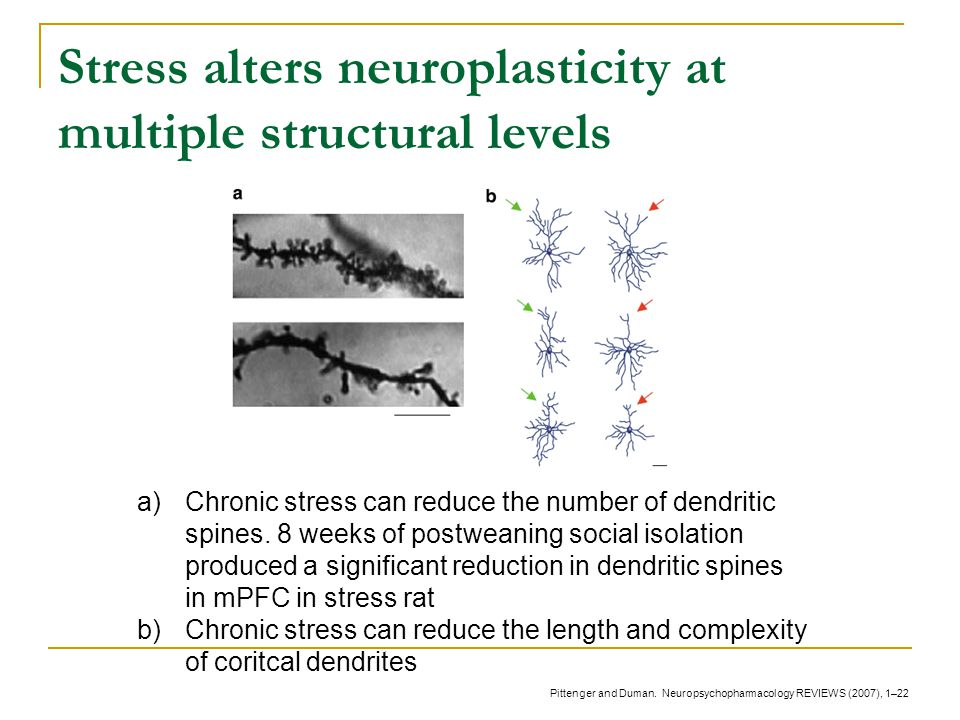 Stress alters neuroplasticity at multiple structural levels