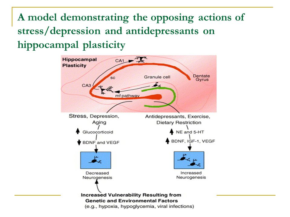A model demonstrating the opposing actions of stress/depression and antidepressants on hippocampal plasticity