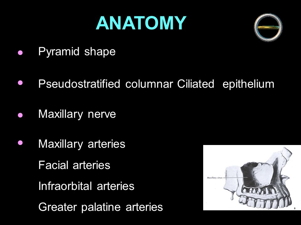 ANATOMY Pyramid shape Pseudostratified columnar Ciliated epithelium