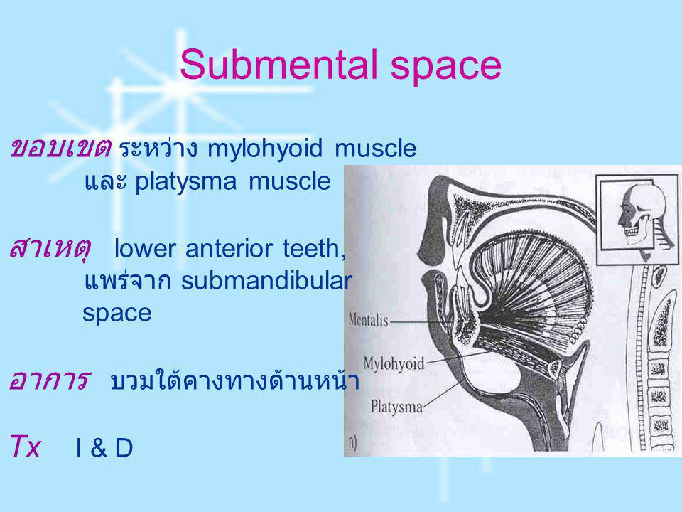 Submental space ขอบเขต ระหว่าง mylohyoid muscle