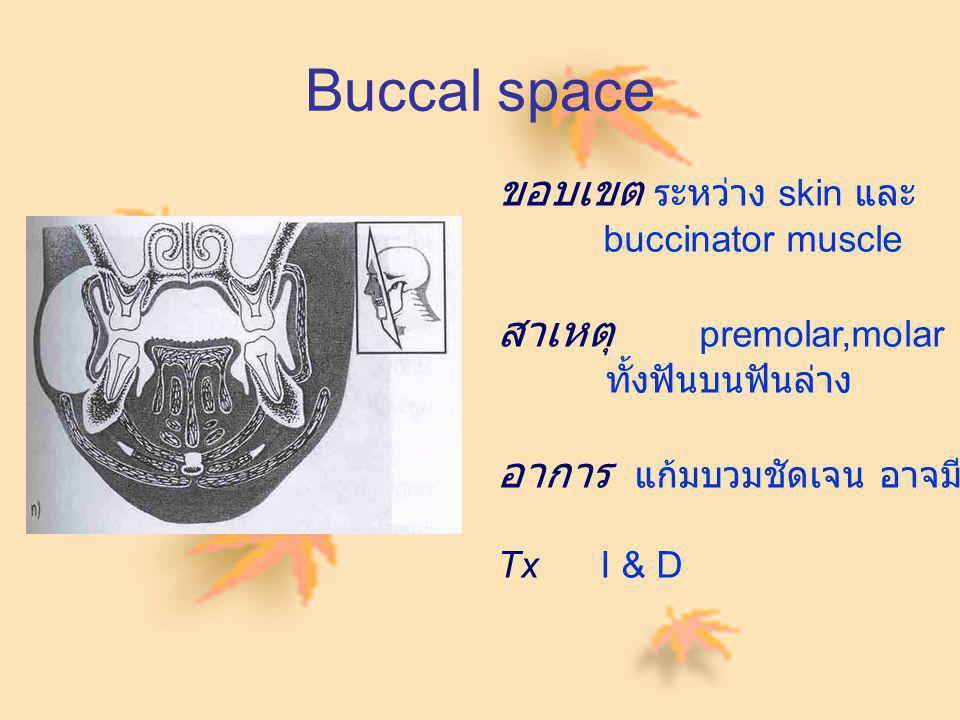 Buccal space ขอบเขต ระหว่าง skin และ สาเหตุ premolar,molar