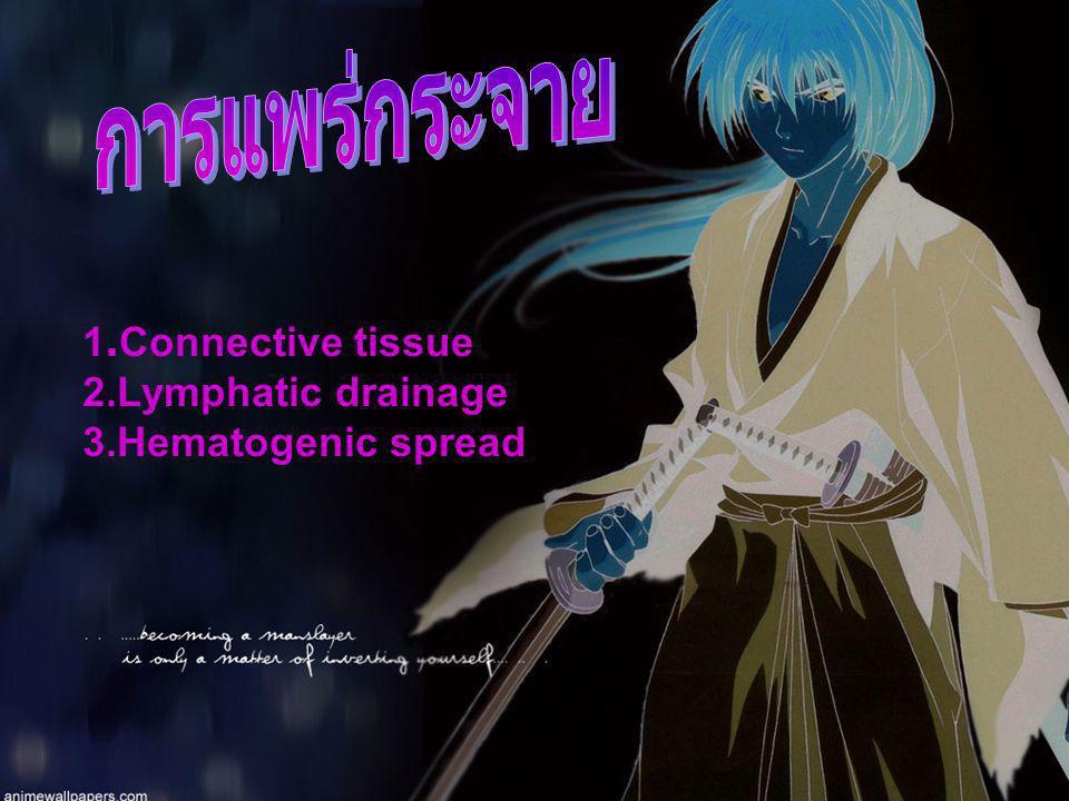 การแพร่กระจาย 1.Connective tissue 2.Lymphatic drainage
