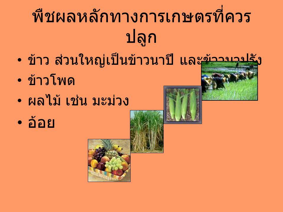 พืชผลหลักทางการเกษตรที่ควรปลูก